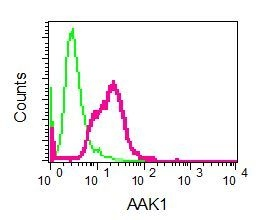 Flow Cytometry - Anti-AAK1 antibody [EPR5126(2)] (ab134971)