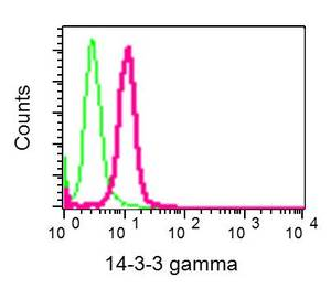 Flow Cytometry - Anti-14-3-3 gamma antibody [EPR9655(B)] (ab137106)