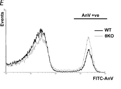 Flow Cytometry - Annexin V-FITC Apoptosis Detection Reagent (5X) (ab14082)