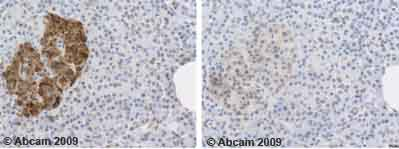 Immunohistochemistry (Formalin/PFA-fixed paraffin-embedded sections) - C Peptide antibody (ab14181)