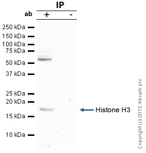 Immunoprecipitation - Anti-Histone H3 (mono methyl R2) antibody - ChIP Grade (ab15584)
