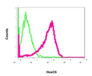 Flow Cytometry - Anti-HoxC6 antibody [EPR7922(2)] (ab151575)