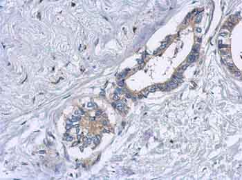 Immunohistochemistry (Formalin/PFA-fixed paraffin-embedded sections) - Anti-EML2 antibody (ab153948)