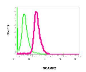 Flow Cytometry - Anti-SCAMP2 antibody [EPR10185] (ab154181)
