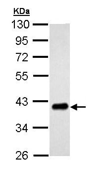 Western blot - Anti-PTK9 antibody (ab154725)