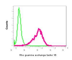 Flow Cytometry - Anti-Rho guanine exchange factor 16 antibody [EPR9950] (ab154785)