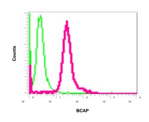 Flow Cytometry - Anti-PHF11 antibody [EPR10910] (ab155077)