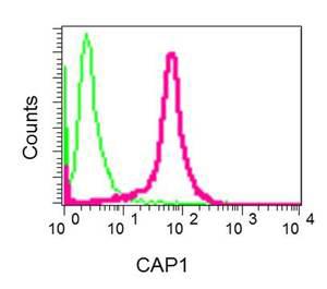 Flow Cytometry - Anti-CAP1 antibody [EPR8339(B)] (ab155079)