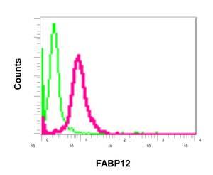 Flow Cytometry - Anti-FABP12 antibody [EPR10536] (ab155089)