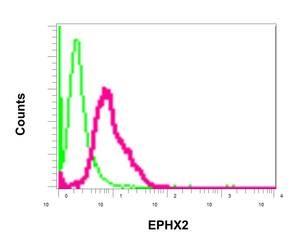Flow Cytometry - Anti-EPHX2 antibody (ab155280)
