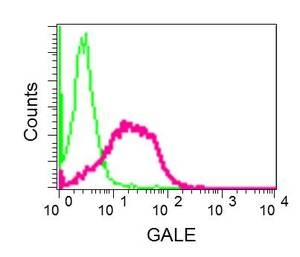 Flow Cytometry - Anti-GALE antibody [EPR11088(B)] (ab155997)