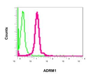 Flow Cytometry - Anti-ADRM1 antibody [EPR11449(B)] (ab157185)