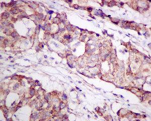 Immunohistochemistry (Formalin/PFA-fixed paraffin-embedded sections) - Anti-TPST2 antibody [O60704] (ab157191)