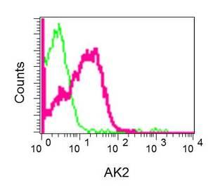 Flow Cytometry - Anti-AK2 antibody [EPR11387(B)] (ab157206)