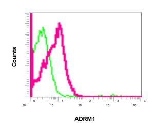 Flow Cytometry - Anti-ADRM1 antibody [EPR11450(B] (ab157218)