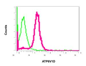 Flow Cytometry - Anti-ATP6V1D antibody [EPR11326(B)] (ab157458)