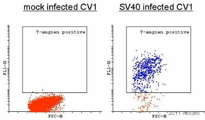 Flow Cytometry - SV40 T-antigen antibody [PAb416] (ab16879)