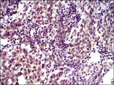 Immunohistochemistry (Formalin/PFA-fixed paraffin-embedded sections) - Anti-ID2 antibody [4E12G5] (ab166708)