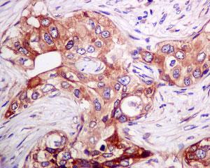 Immunohistochemistry (Formalin/PFA-fixed paraffin-embedded sections) - Anti-DEGS1 antibody [EPR9681] (ab167169)