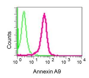 Flow Cytometry - Anti-ANXA9 antibody [EPR11220-11] (ab167402)