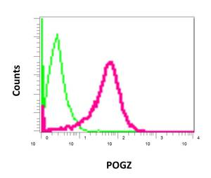 Flow Cytometry - Anti-POGZ antibody [EPR10612] (ab167408)