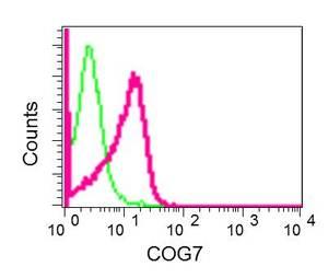 Flow Cytometry - Anti-COG7 antibody [EPR9942] (ab168362)