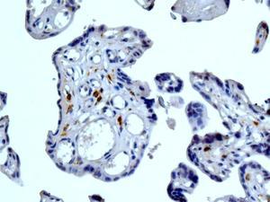 Immunohistochemistry (Formalin/PFA-fixed paraffin-embedded sections) - Anti-CD299 antibody [EPR11211] (ab169783)