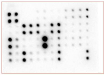 Multiplex Protein Detection - Mouse Cytokine Antibody Array - Membrane (97 targets) (ab169820)