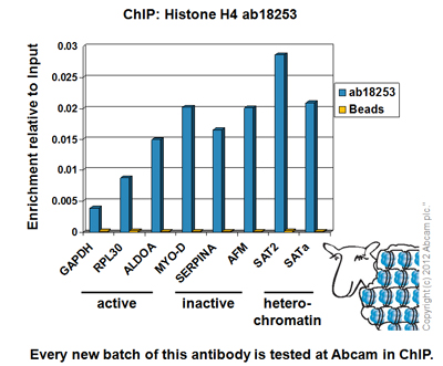 ChIP - Anti-Histone H4 antibody (ab18253)