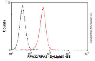 Flow Cytometry - Anti-RPA32/RPA2 antibody [9H8] (ab2175)