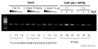 ChIP - Aryl hydrocarbon Receptor  antibody [RPT9] (ab2769)