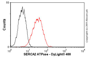 Flow Cytometry-SERCA2 ATPase antibody [IID8](ab2817)