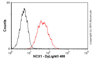 Flow Cytometry - NCX1 antibody [C2C12] (ab2869)