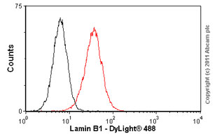 Flow Cytometry-Lamin B1 antibody [ZL-5](ab20396)