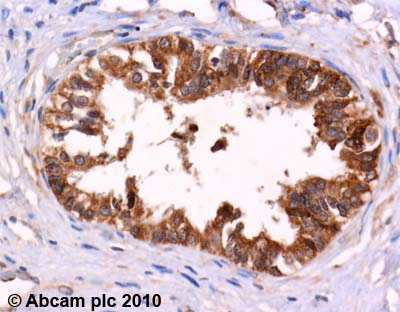 Immunohistochemistry (Formalin/PFA-fixed paraffin-embedded sections)-Leu Enkephalin antibody(ab22619)