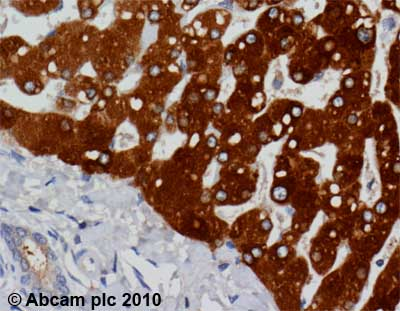 Immunohistochemistry (Formalin/PFA-fixed paraffin-embedded sections)-PON1 antibody [17A12](ab24261)