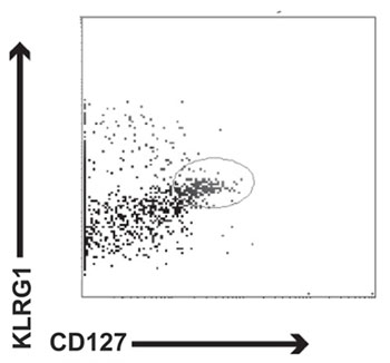 Flow Cytometry - Anti-KLRG1 antibody [2F1] (FITC) (ab24867)