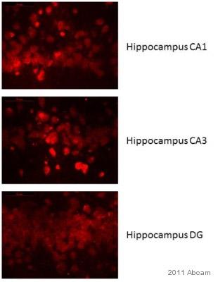 Immunohistochemistry (Frozen sections) - IL10 antibody [2G101H7] (ab25073)
