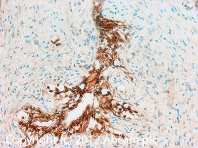 Immunohistochemistry (Formalin/PFA-fixed paraffin-embedded sections) - Anti-Alpha SNAP antibody [15D4] (ab28352)