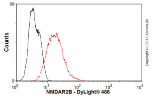 Flow Cytometry-Anti-NMDAR2B antibody [NR2B](ab28373)