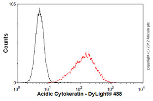 Flow Cytometry - Anti-Acidic Cytokeratin antibody [AE1] (ab3117)