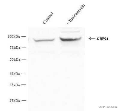 Western blot - GRP94 antibody - ER Marker (ab3674)