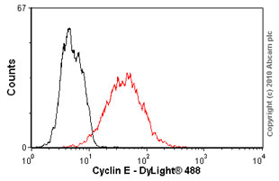 Flow Cytometry - Anti-Cyclin E1 [HE12] antibody (ab3927)