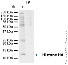 Immunoprecipitation - Anti-Histone H4 antibody [mAbcam 31830] - ChIP Grade (ab31830)