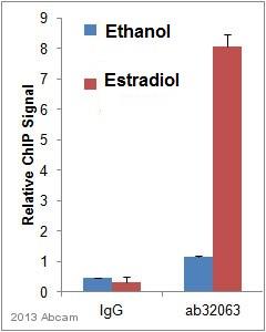 ChIP - Anti-Estrogen Receptor alpha antibody [E115] - ChIP Grade (ab32063)