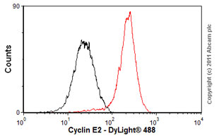 Flow Cytometry-Anti-Cyclin E2 antibody [E142](ab32103)