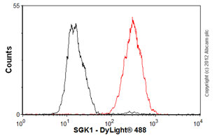 Flow Cytometry-Anti-SGK1 antibody [Y238](ab32374)