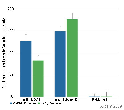 ChIP - HMGA1a / HMGA1b antibody - ChIP Grade (ab4078)