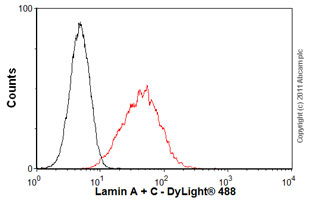 Flow Cytometry-Lamin A + C antibody [JOL2](ab40567)