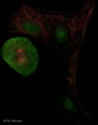 Immunocytochemistry/ Immunofluorescence - TTC10 antibody (ab42497)